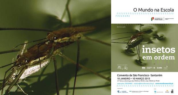 insetos-tavira