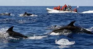 A Natura Algarve é uma empresa de ecoturismo que opera no Algarve   img: Natura Algarve