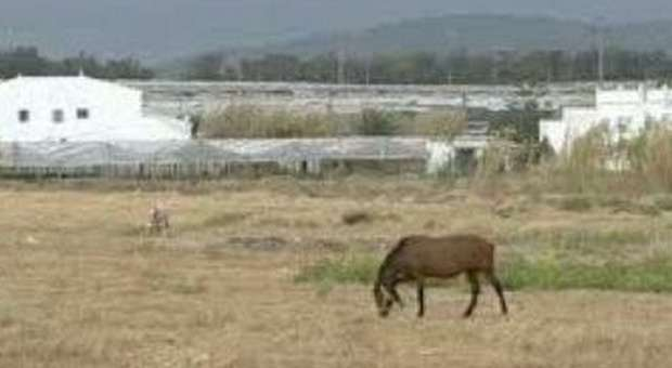 cavalos abandonados no algarve (F)