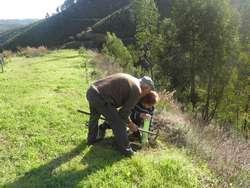 Os Seniores plantam sobreiros em Monchique