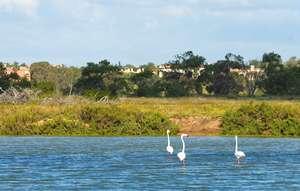 Algarve_Ria_© Associação de Turismo do Algarve _ab