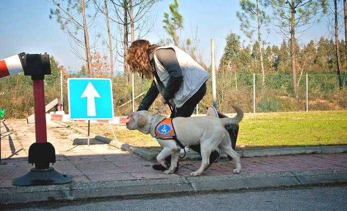 cão guia - ação de educação - crd caesguia.org