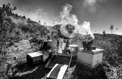 São Brás premia os vencedores do Desafio Fotográfico