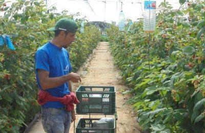 Empresas do Baixo Guadiana recebem formandos da Odiana