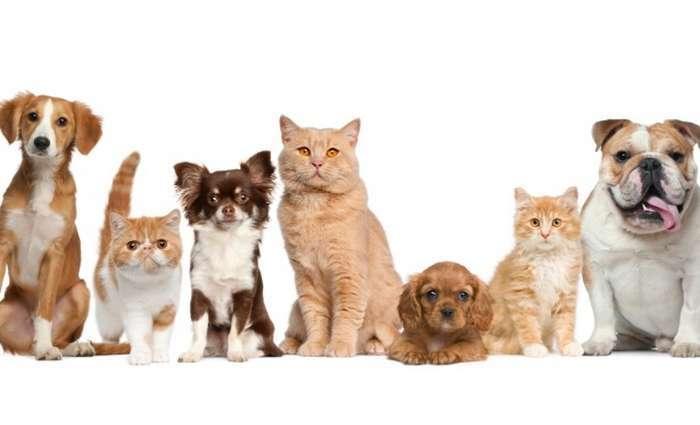 Campanha de Castração gratuita de cães e gatos em Lagos