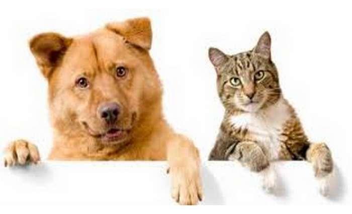 Lagos promoveu campanha de castração animal