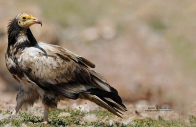 Festival de Observação de Aves abre portas em Sagres
