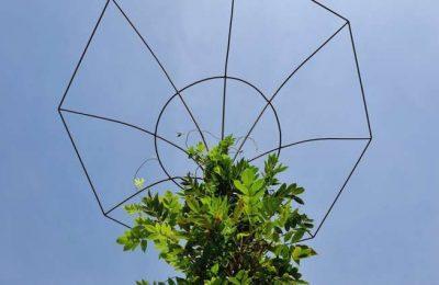 Castro Marim planta o projeto vila mais florida