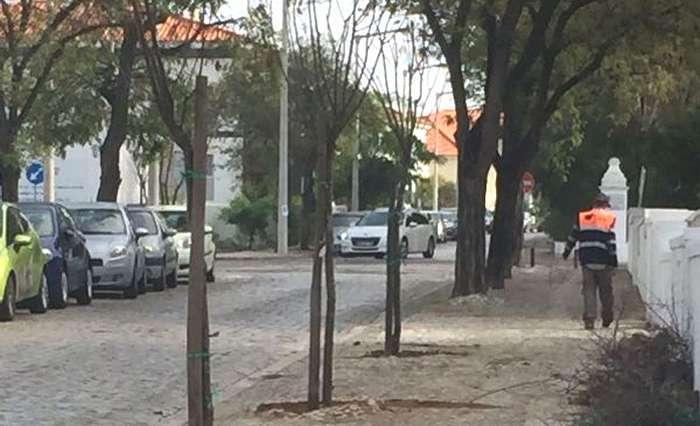 Câmara de Faro planta mais de 400 árvores na cidade