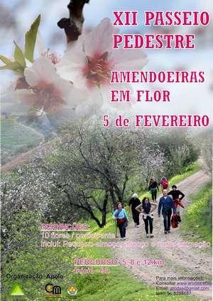 Passeio Pedestre Amendoeiras em Flor no Alta Mora