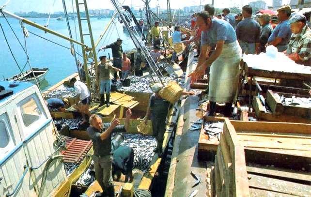 O Algarve é a região do país com o peixe mais caro