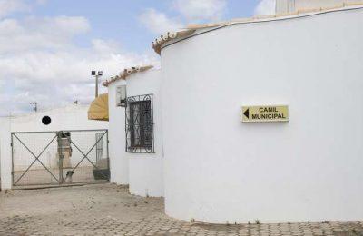 Canil de Lagoa já tem médica veterinária permanente