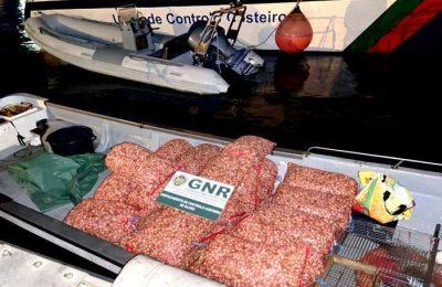 GNR apreendeu 500 Kg de berbigão por apanha ilegal
