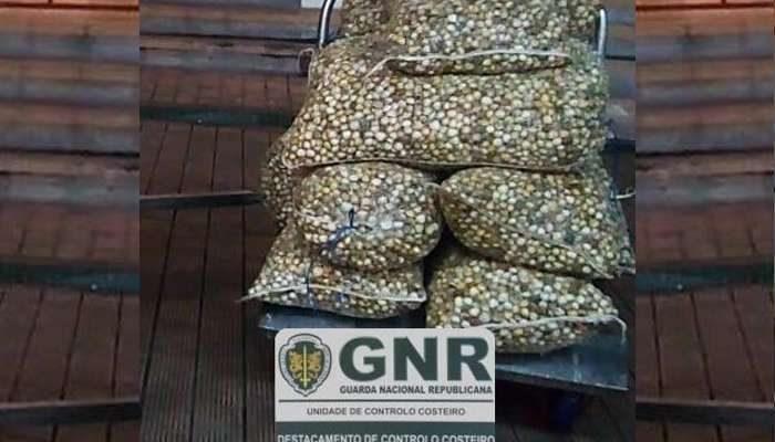 GNR de Olhão apreende mais de 230Kg de berbigão