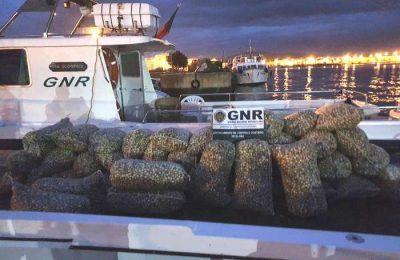 GNR de Olhão apreendeu 1400 quilos de berbigão
